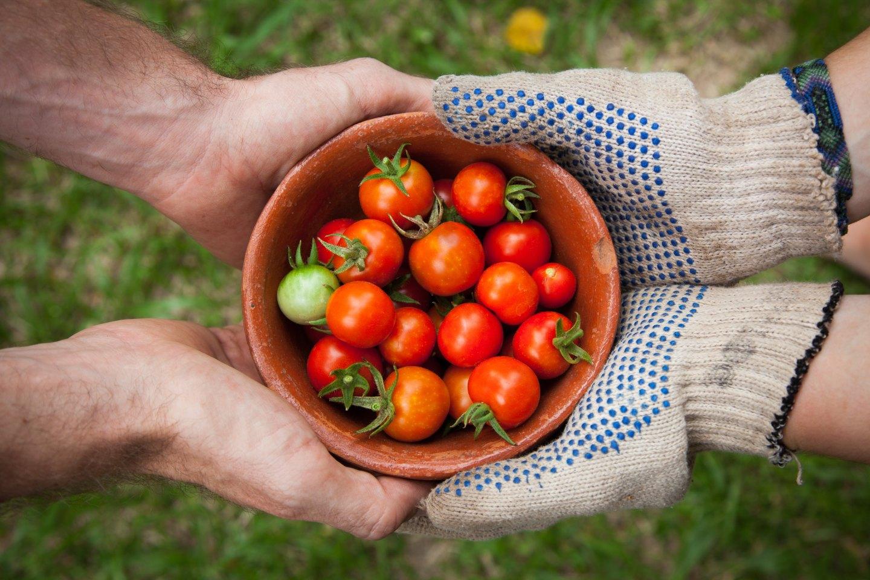 Generosity - people giving tomatoes