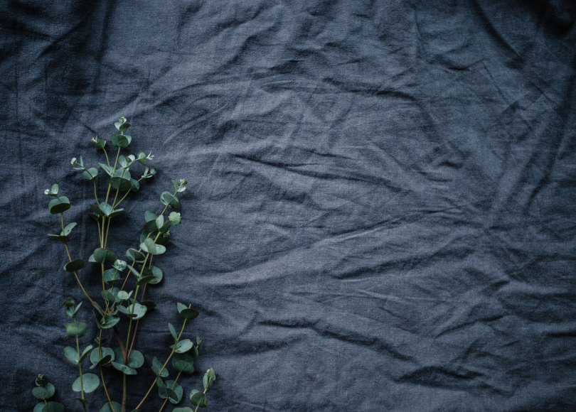 Plant on a gray sheet