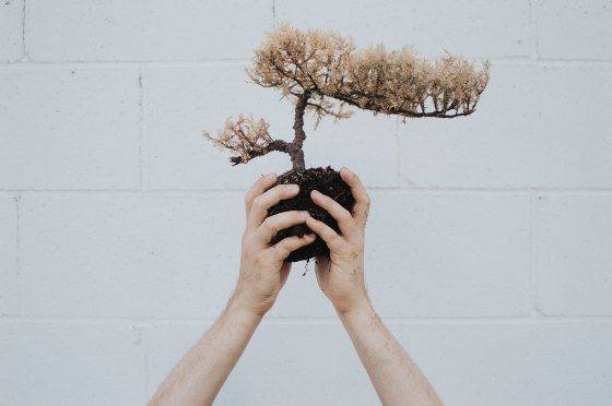 Person holding up a bonsai tree and its roots