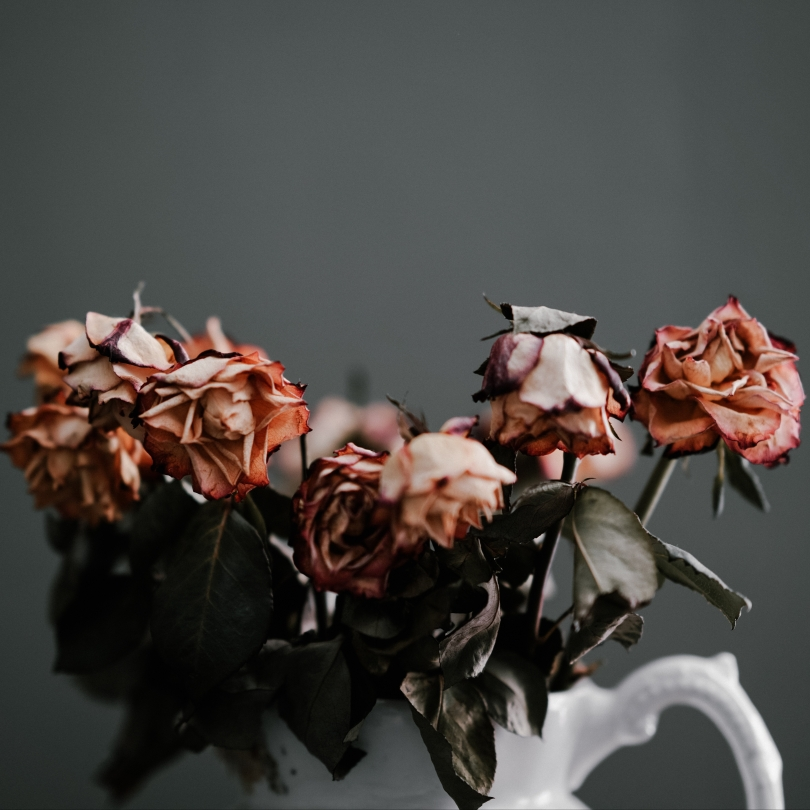 Wilted roses in a pitcher