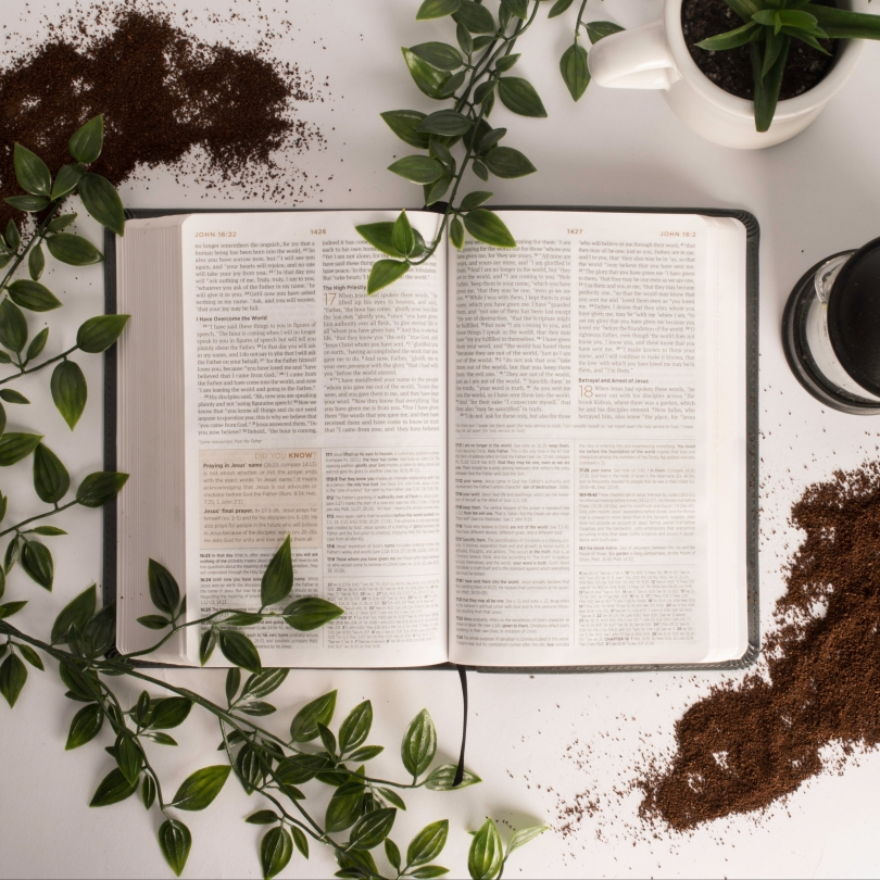 Bible, coffee, and plants